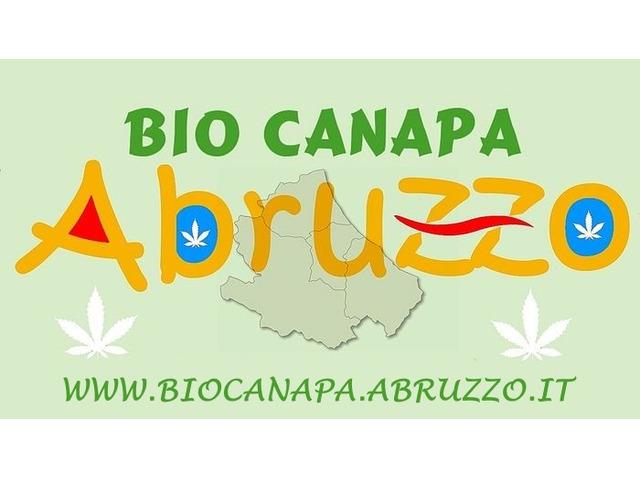 Bio Canapa Abruzzo - 1/4