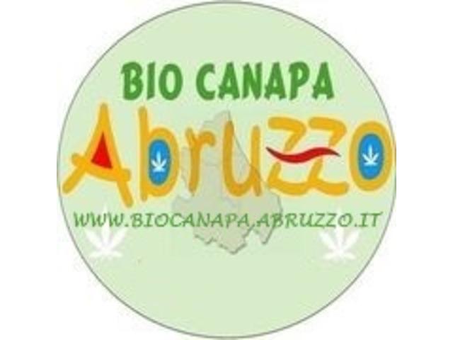 Bio Canapa Abruzzo - 4/4